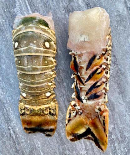 Raw Caribbean Lobster Tail